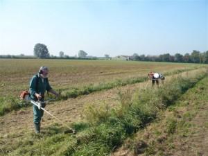 vrijwilligers verwijderen onkruid in de heg aan de Herreweg in Balgoy