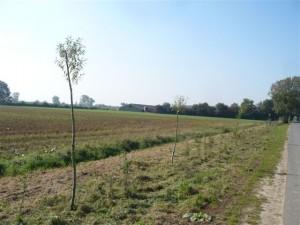nieuw geplante heg langs Herreweg in Balgoy