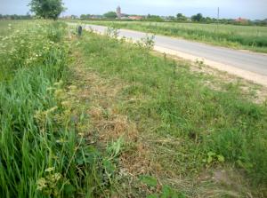 jonge heg langs de herreweg in balgoy balgoij